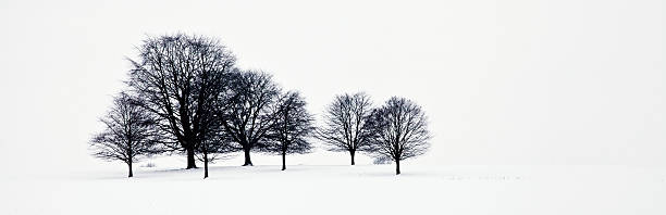 Trees in a snowy field in chatsworth park