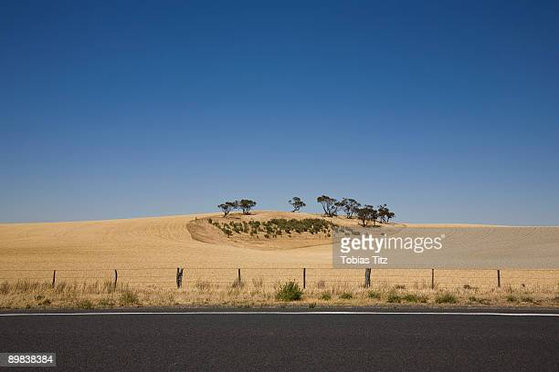 trees in a wheat field by a roadside - roadside stock pictures, royalty-free photos & images
