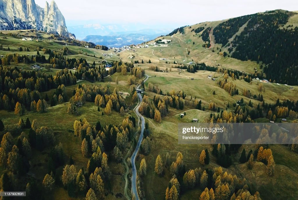 trees in seiser alm : Foto stock