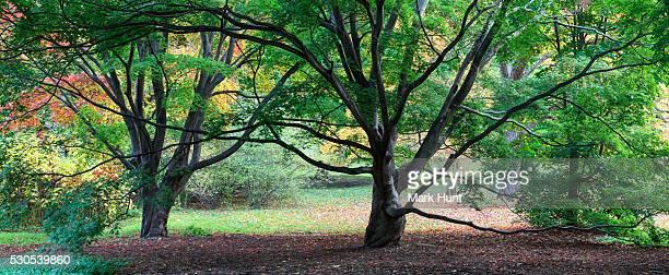 Trees in Arnold Arboretum, Boston, Massachusetts, USA