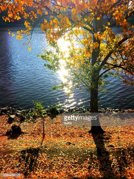 Trees in Autumn colors at the river side
