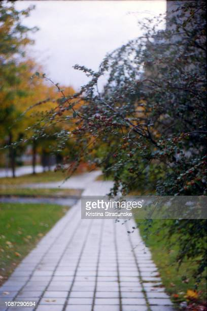trees in autumn colors by a pavement - kristina strasunske stock photos and pictures