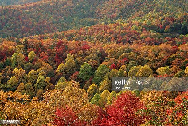 trees in autumn - blue ridge parkway stock pictures, royalty-free photos & images