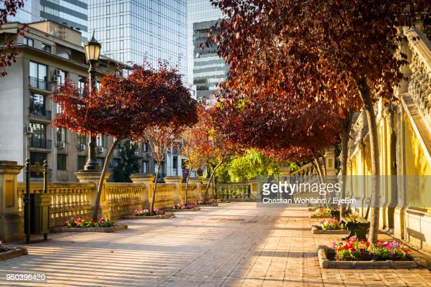 trees in city - santiago chile stock pictures, royalty-free photos & images