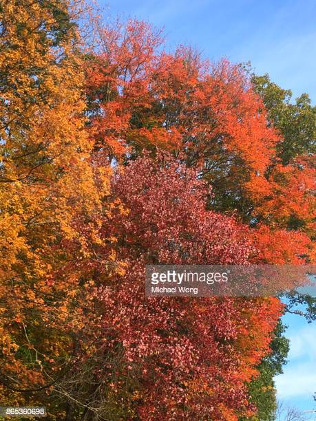 Trees in color during Autumn