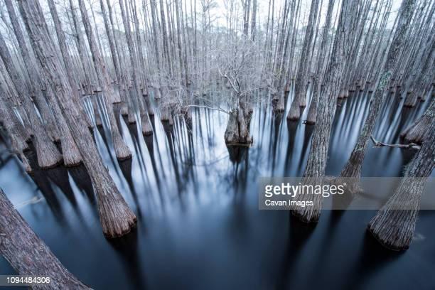 trees in cypress swamp at pine log state forest - pine log state forest stock photos and pictures