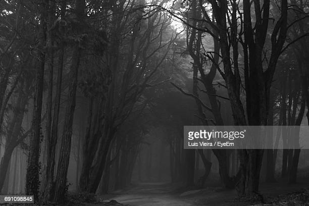 Trees In Dark Forest