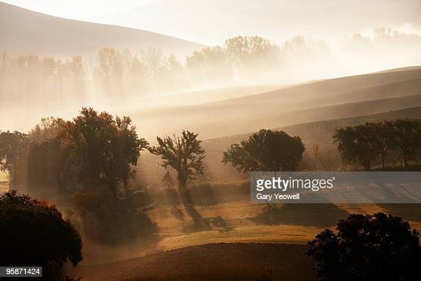 trees in early morning mist - yeowell stock photos and pictures