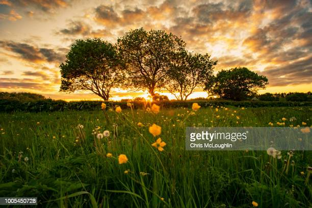3 trees in featherstone in west yorkshire at sunset - leicestershire stock pictures, royalty-free photos & images