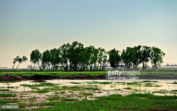 trees in field against sky - bangladesh nature stock photos and pictures