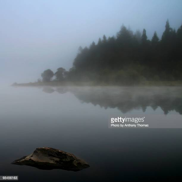 Trees in fog by a  lake
