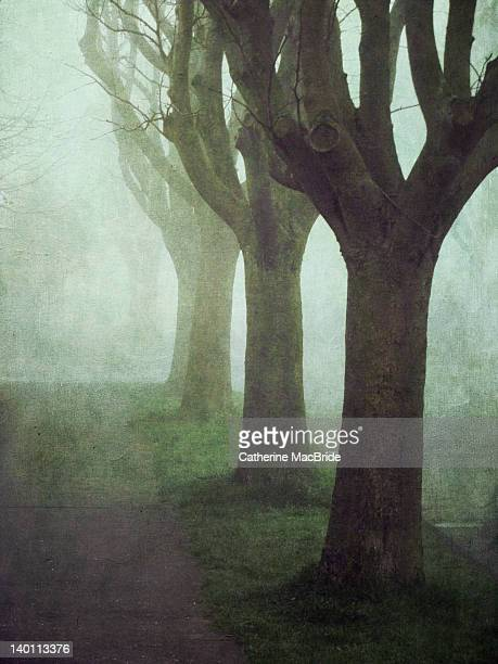 trees in fog - catherine macbride stock pictures, royalty-free photos & images