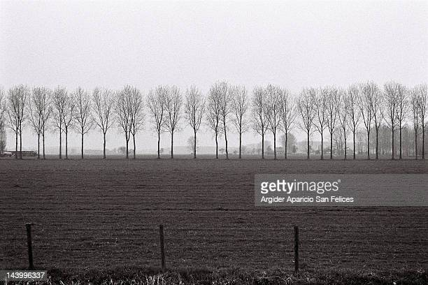 trees in  fog - sanduíche stock pictures, royalty-free photos & images
