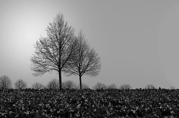 Trees In Fog Wall Art