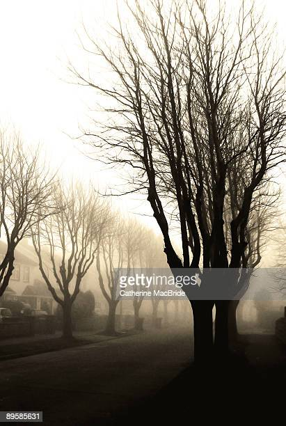 trees in fog - catherine macbride stock-fotos und bilder