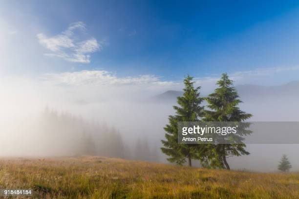 Trees in foggy mountains at dawn