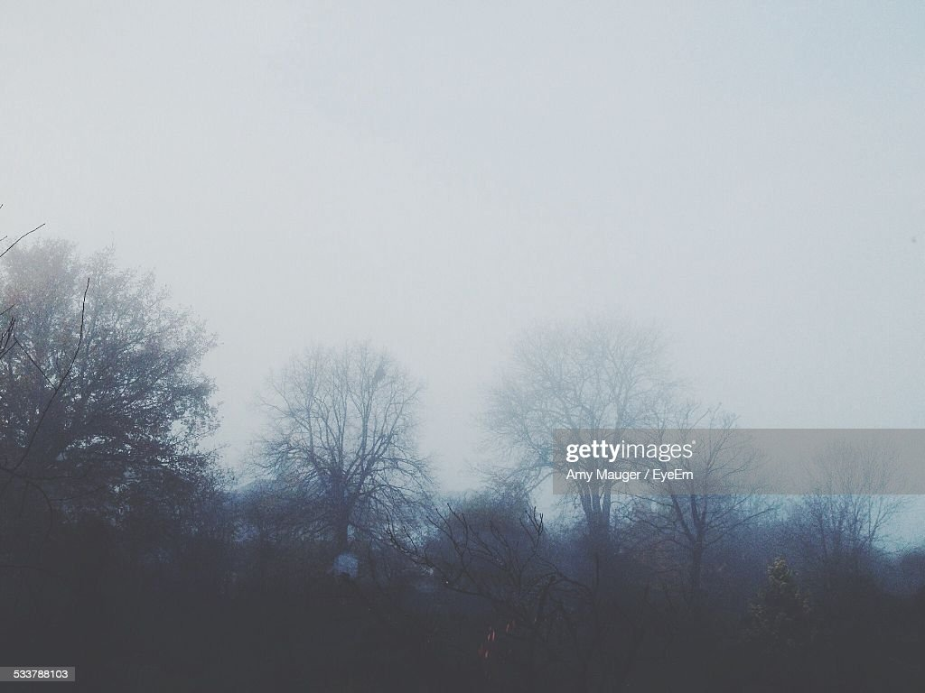Trees In Foggy Weather : Foto stock