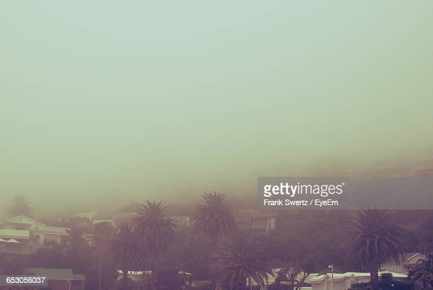 trees in foggy weather - frank swertz stock photos and pictures