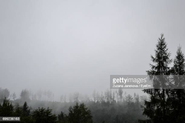 trees in foggy weather - zuzana janekova stock pictures, royalty-free photos & images