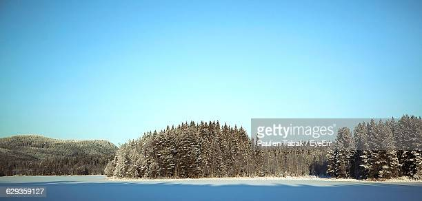 trees in forest against clear sky during winter - paulien tabak stock pictures, royalty-free photos & images