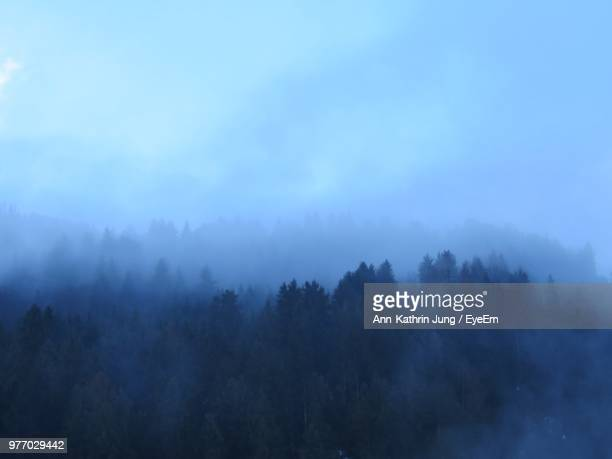 Trees In Forest Against Sky At Foggy Weather