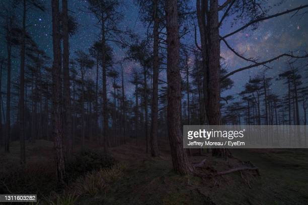 trees in forest against sky at night - wildlife stock pictures, royalty-free photos & images