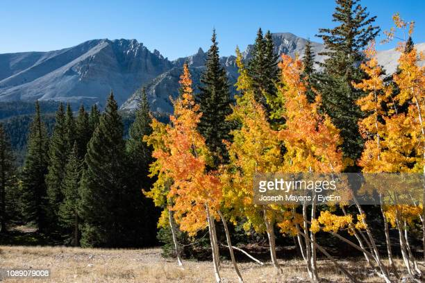 trees in forest against sky during autumn - great basin stock pictures, royalty-free photos & images