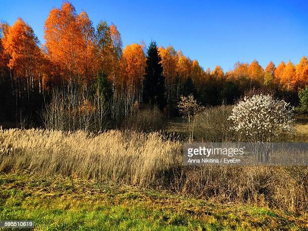 trees in forest against sky during autumn - nikitina stock pictures, royalty-free photos & images