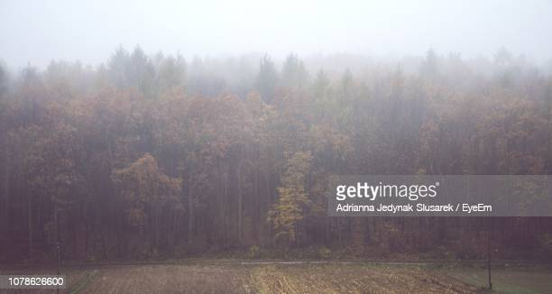 Trees In Forest Against Sky During Foggy Weather