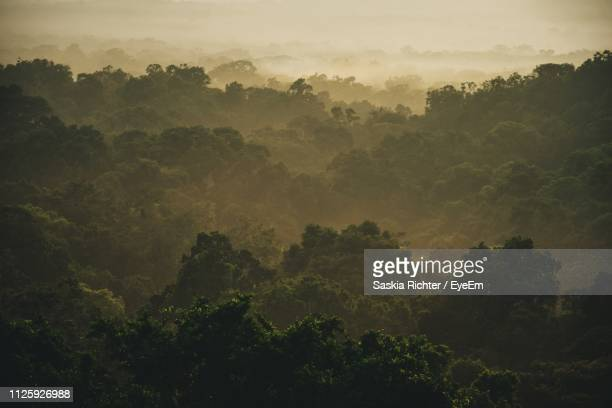 trees in forest against sky during sunset - treetop stock pictures, royalty-free photos & images