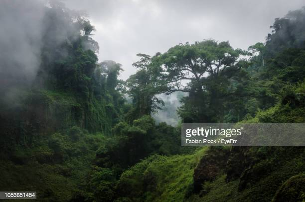 trees in forest against sky - cameroon stock pictures, royalty-free photos & images