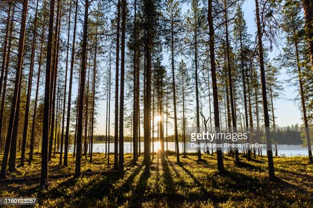 trees in forest against sky - finland stock pictures, royalty-free photos & images