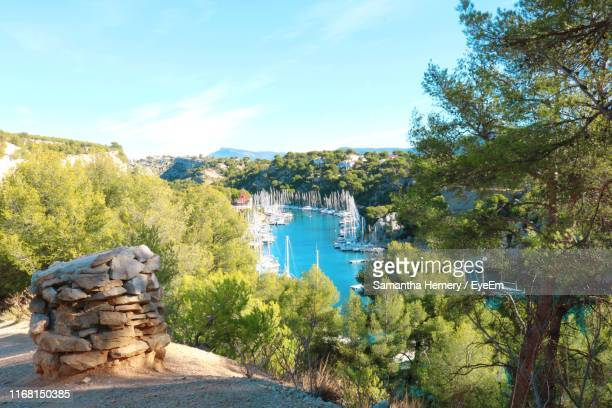 trees in forest against sky - cassis stock pictures, royalty-free photos & images