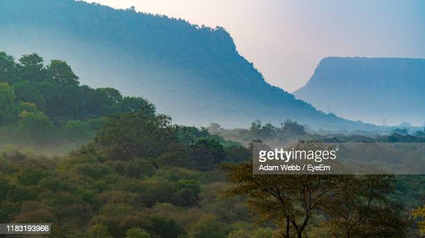 trees in forest against sky - ranthambore national park stock pictures, royalty-free photos & images