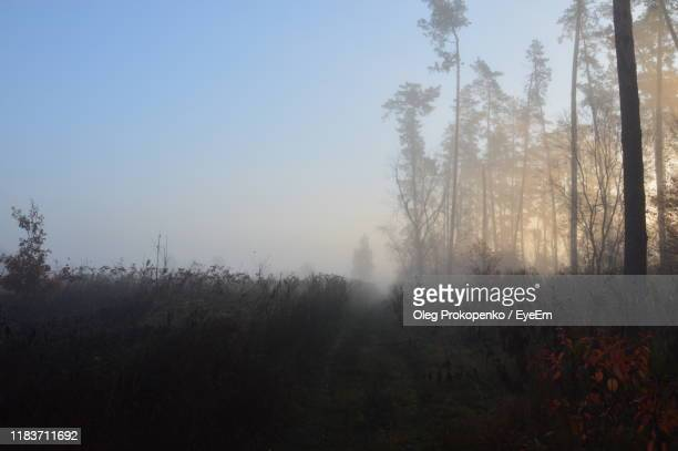 trees in forest against sky - oleg prokopenko stock pictures, royalty-free photos & images