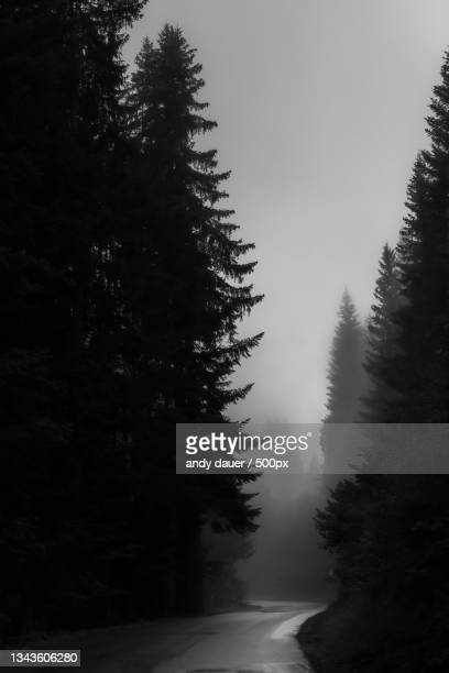 trees in forest against sky - andy dauer stock pictures, royalty-free photos & images