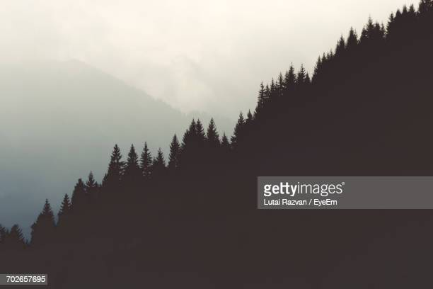 trees in forest against sky - lutai razvan stock pictures, royalty-free photos & images
