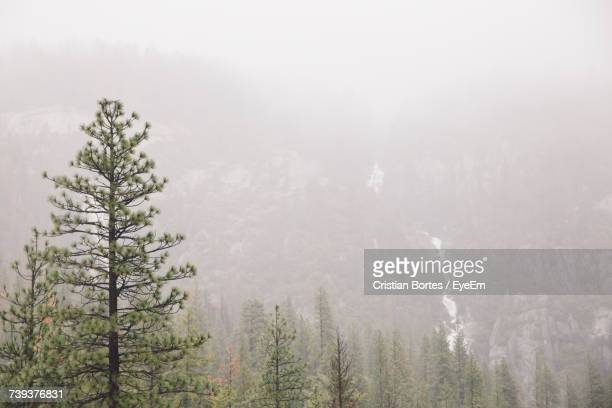 trees in forest against sky - bortes foto e immagini stock