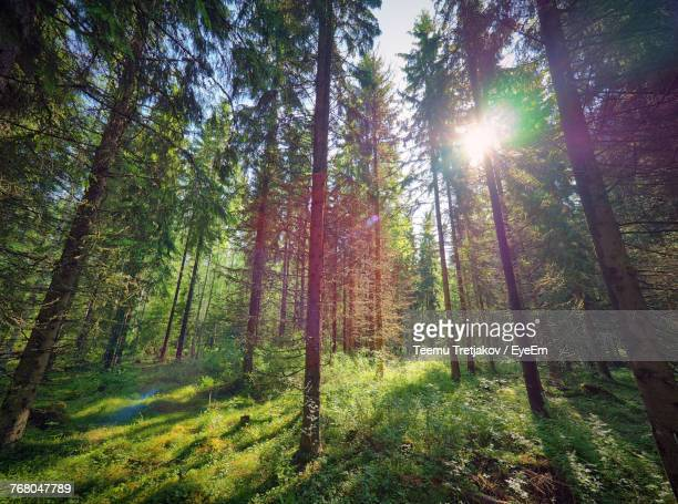 trees in forest against sky - teemu tretjakov stock pictures, royalty-free photos & images
