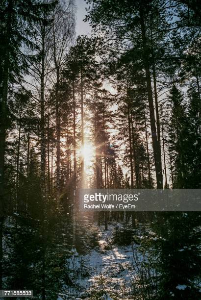 trees in forest against sky - rachel wolfe stock pictures, royalty-free photos & images