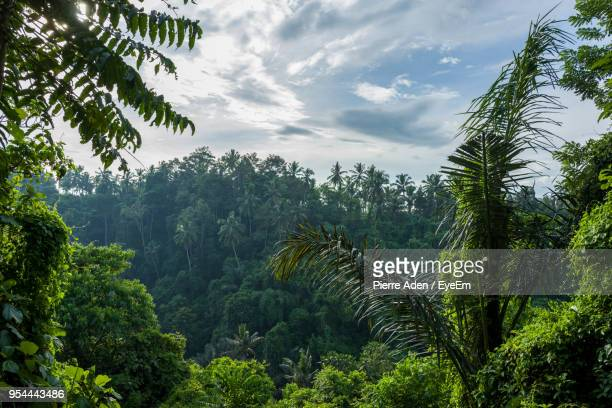 trees in forest against sky - ubud district stock pictures, royalty-free photos & images