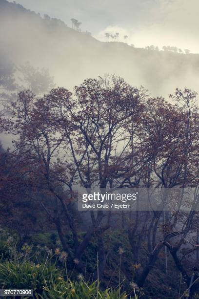 trees in forest against sky - atlantic islands stock pictures, royalty-free photos & images