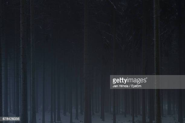 Trees In Forest At Night During Winter