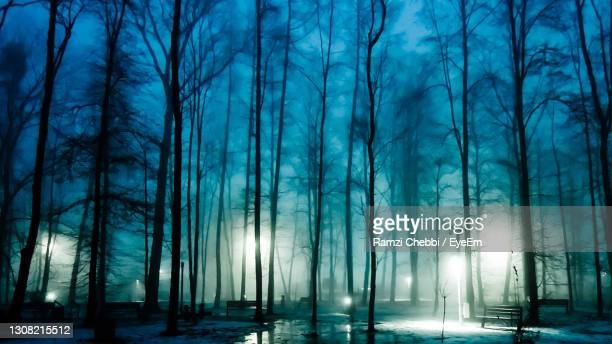 trees in forest at night - moscow russia stock pictures, royalty-free photos & images