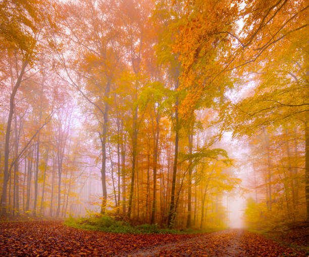 Trees In Forest During Autumn, Kleinrinderfeld, Germany