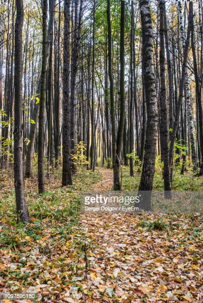 trees in forest during autumn - sergei stock pictures, royalty-free photos & images