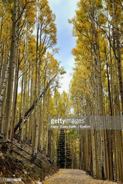 trees in forest during autumn - kerry estey keith stock photos and pictures