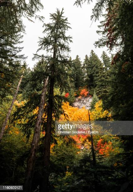 trees in forest during autumn - christian soldatke stock pictures, royalty-free photos & images