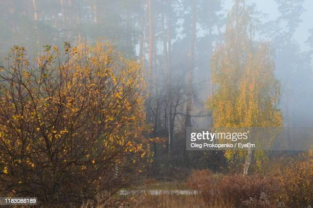 trees in forest during autumn - oleg prokopenko stock pictures, royalty-free photos & images