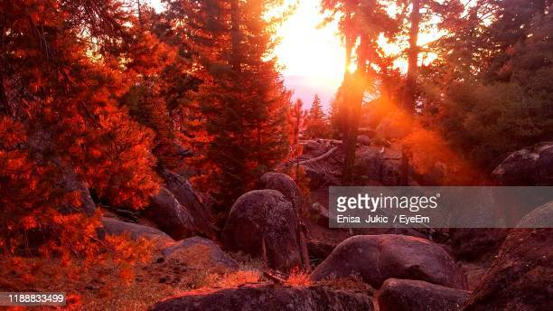 trees in forest during autumn - enisa jukic stock photos and pictures